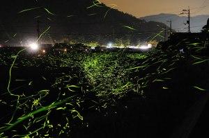 """""""Fireflies"""", Yuki Karo"""