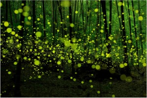 """Last Dance of the Fireflies"", Yume Cyan"